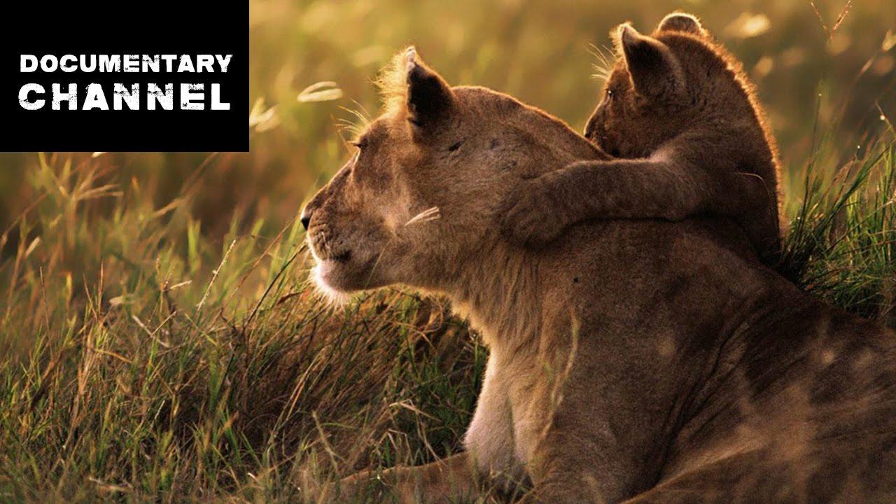 Wildlife Serengeti Watch Online